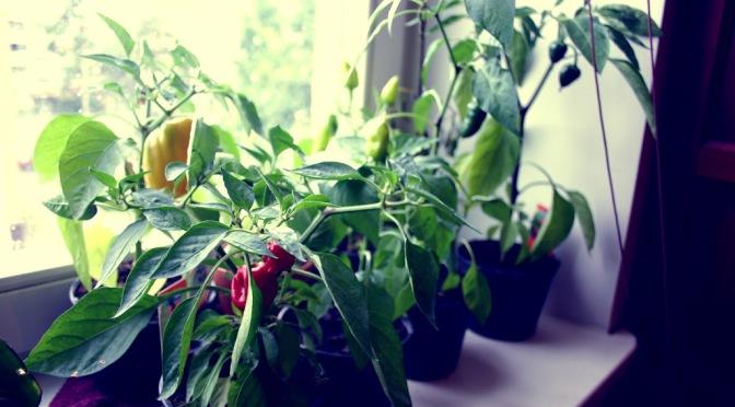taimed